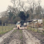 farmer-and-pigs-missfoodwise