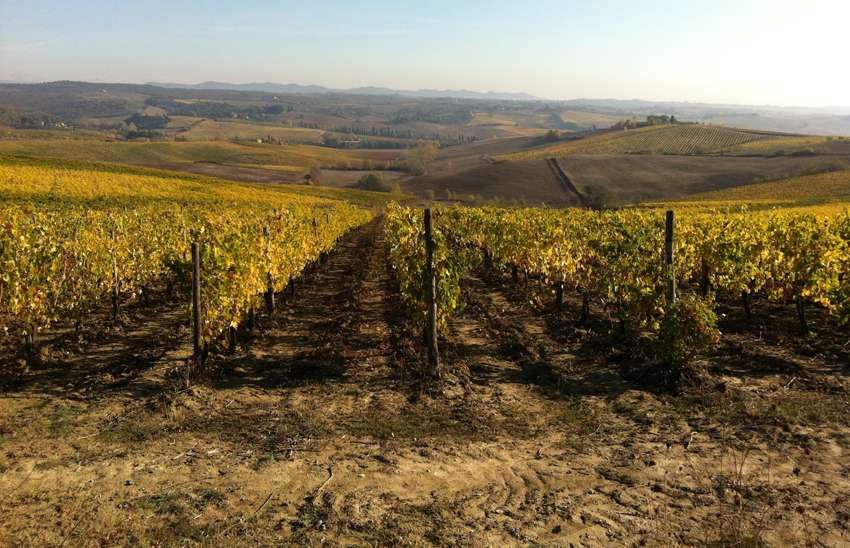 Tuscany-autumn-vines